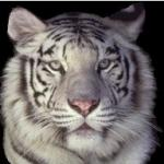 View hotigris's profile